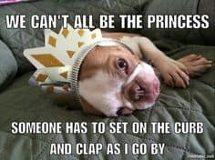 French bulldog princess meme
