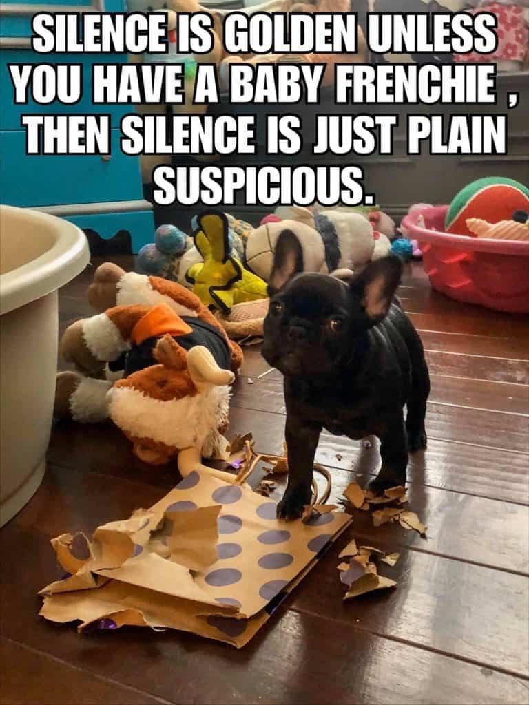 silence is golden french bulldog meme