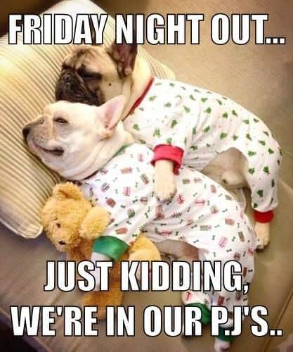 Frenchie Friday Night Meme