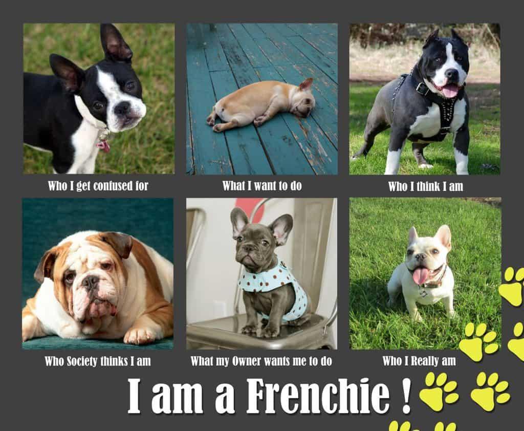 I am a Frenchie Meme