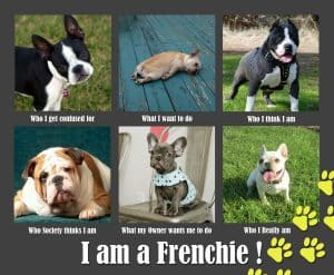 I am a Frenchie Meme