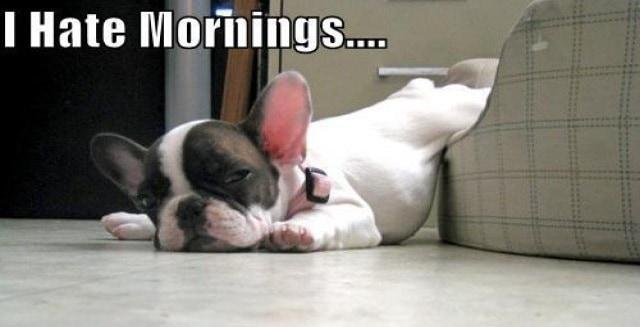 French Bullie Monday Mornings