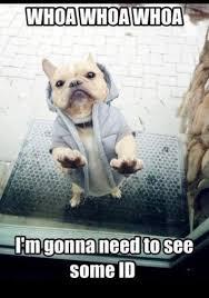 French Bulldog Bouncer Meme