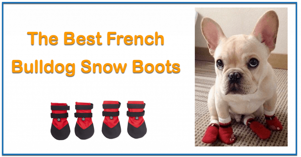 Best Dog Snow Boots
