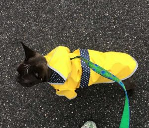 Best french bulldog raincoat