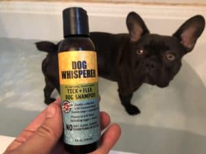 best dog flea shampoo