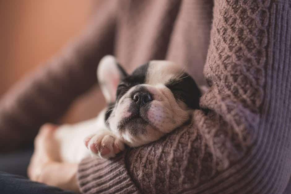 dog sleeping bag options
