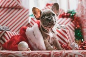 French Bulldog Christmas ideas
