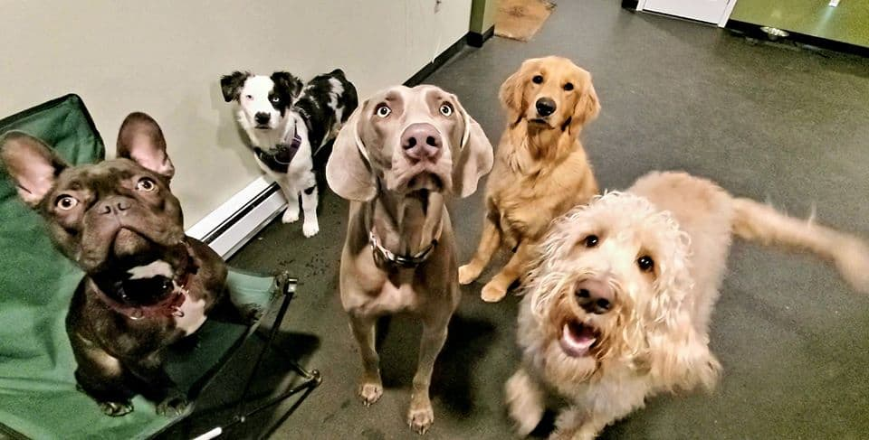 doggy day care benefits