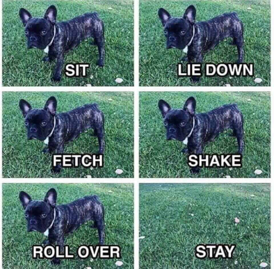 French Bulldog Training Meme