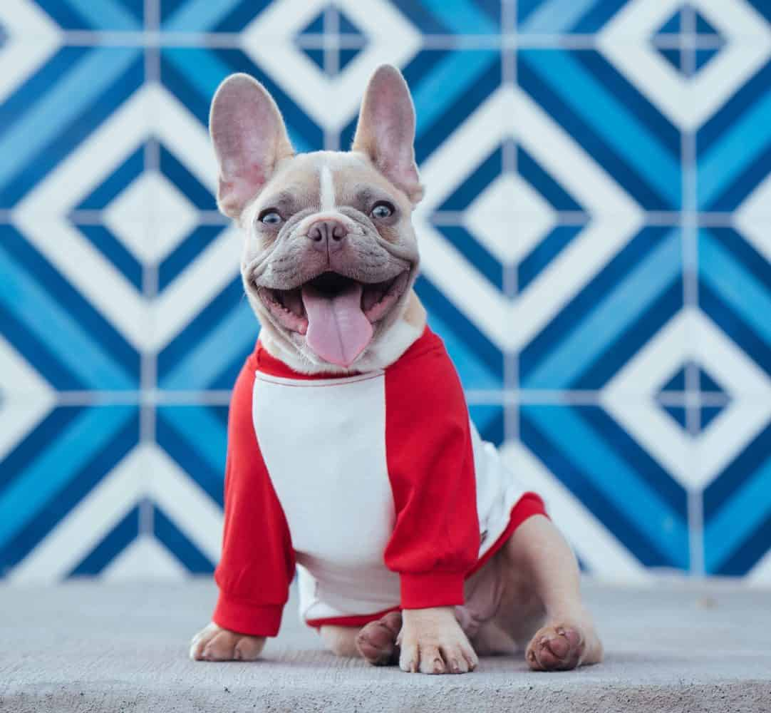 500 Ideas For French Bulldog Names The Ultimate Guide