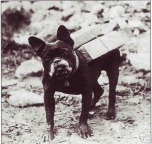 World War 1 French Bulldog