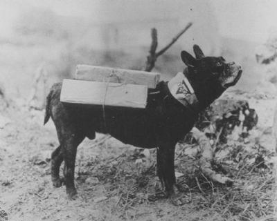 French Bulldog World War 1