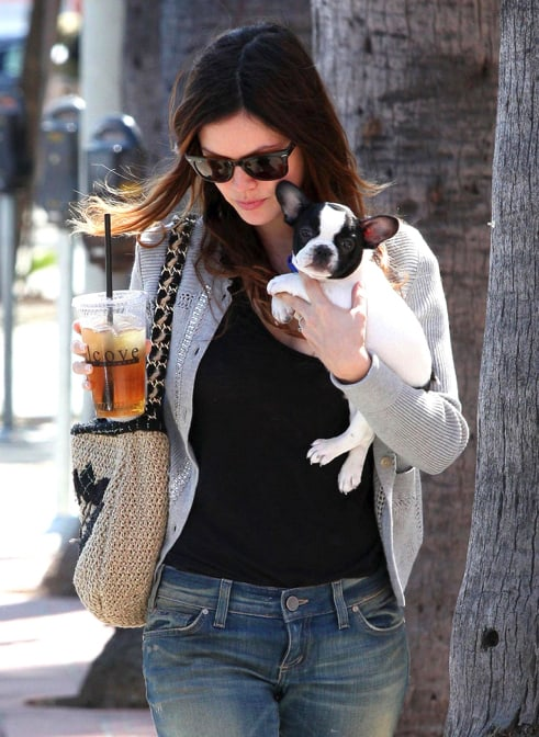 Rachel Bilson French Bulldog