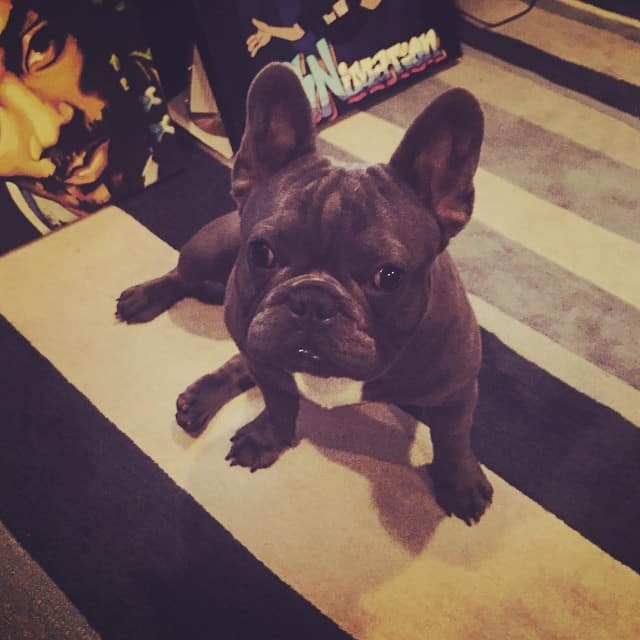 Snoop Dogg French Bulldog