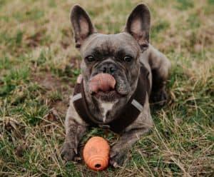 french bulldog safe toys