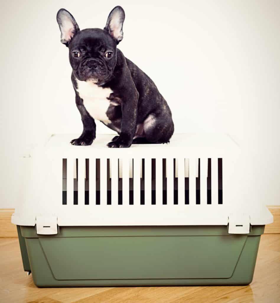 french bulldog crate