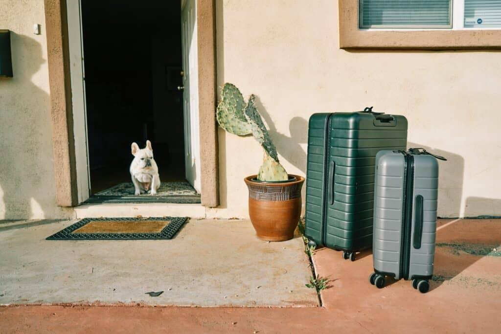 french bulldog travel