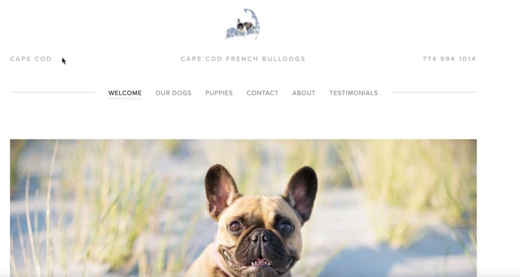 cape cod frenchies website